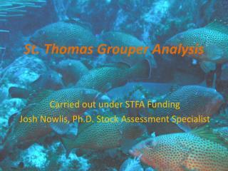 St. Thomas Grouper Analysis
