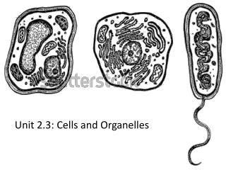 Unit 2.3: Cells and Organelles