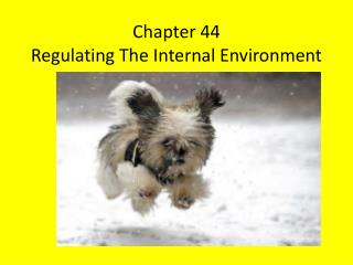 Chapter 44 Regulating The Internal Environment