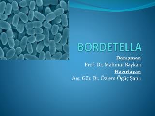 BORDETELLA