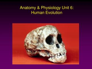 Anatomy  Physiology Unit 6: Human Evolution