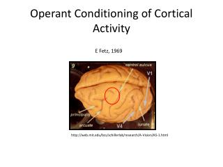 Operant Conditioning of Cortical Activity