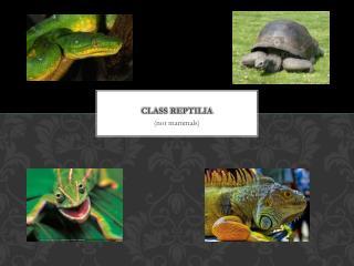 Class  Reptilia