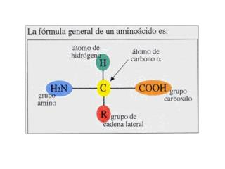 http://copepodo.files.wordpress.com/2010/11/amino-acid-chart.jpg