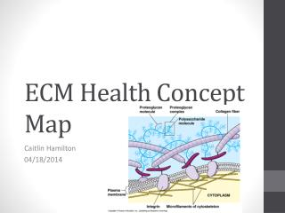 ECM Health Concept Map
