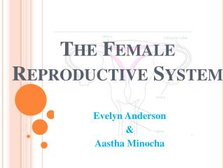 The Female Reproductive Syste m