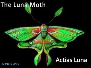 The  L una Moth