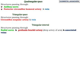 Quadrangular space Structures passing through : Axillary nerve