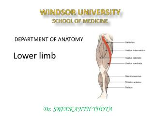 WINDSOR UNIVERSITY SCHOOL OF MEDICINE