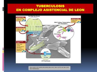 TUBERCULOSIS  EN COMPLEJO ASISTENCIAL DE LEON