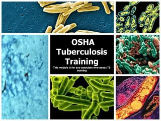 OSHA Tuberculosis Training  This module is for any associate who needs TB training