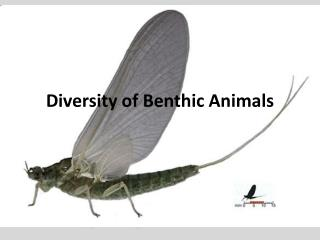Diversity of Benthic Animals