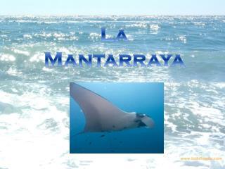 La Mantarraya