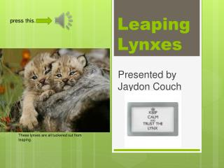 Leaping Lynxes