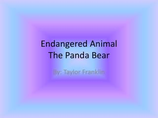Endangered Animal The Panda Bear