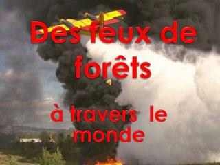 D es  feux de forêts