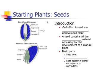 Starting Plants: Seeds