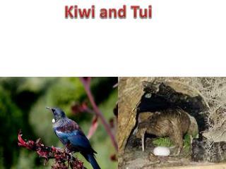 Kiwi and  Tui