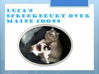 Luca's spreekbeurt over Maine coons