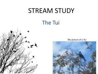 STREAM STUDY