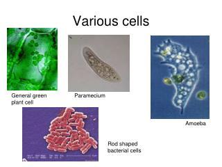 Various cells