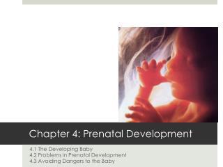 Chapter 4: Prenatal Development
