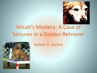 Micah�s Mystery: A Case of Seizures in a Golden Retriever