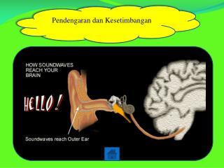 Pendengaran dan Kesetimbangan
