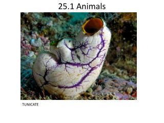 25.1 Animals