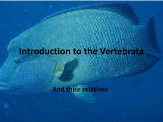 Introduction to the Vertebrata