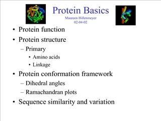 Protein Basics Maureen Hillenmeyer 02-04-02