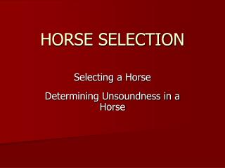 HORSE SELECTION