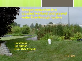 Estrogen reduction in a coupled wetland and ground water flow-through  system