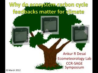Why do ecosystem carbon cycle feedbacks  matter  for climate