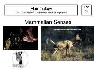 Mammalian Senses