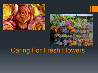 Caring For Fresh Flowers