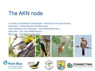 The AKN  node
