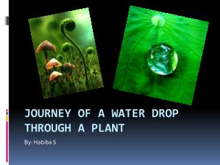 Journey of a Water Drop Through a Plant