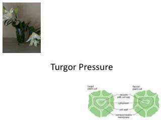 Turgor Pressure