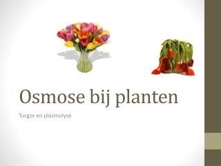 Osmose bij planten