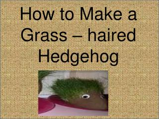 How to Make a Grass – haired Hedgehog