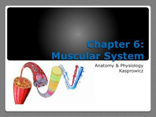 Chapter 6:  Muscular System