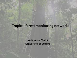 Tropical forest monitoring networks