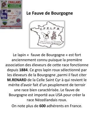 Le Fauve de Bourgogne