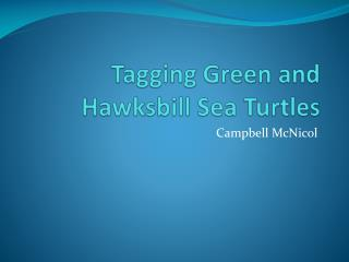 Tagging Green and Hawksbill Sea Turtles