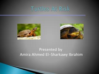 Turtles  At Risk