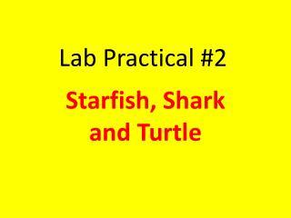 Lab Practical #2