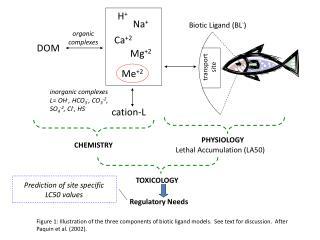 Biotic  Ligand (BL - )