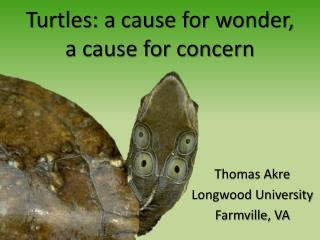 Turtles: a cause for wonder,  a cause for concern