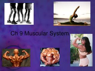 Ch 9 Muscular  System